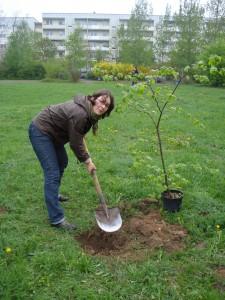 Mein erster Baum an diesem Tag